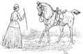 Horsemanship for Women 021.png
