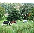 Horses at Ardgowan Estate - geograph.org.uk - 548457.jpg
