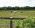 Horses in paddock on Hapton Estate - geograph.org.uk - 1385761.jpg