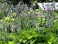 Hosta flowers (28694769722).jpg