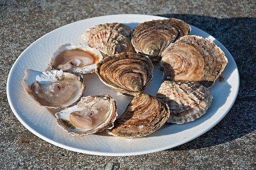 Huitres Cancale - flat oysters
