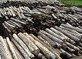 Illegal rosewood stockpiles 002.jpg