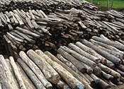 A close-up photo of an organized pile of dozens of rosewood logs