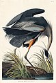 Illustration from Birds of America (1827) by John James Audubon, digitally enhanced by rawpixel-com 211.jpg