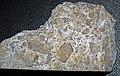 Impact breccia (Eocene, 39 Ma; Haughton Impact Structure, Devon Island, northern Canada) 4 (16678130050).jpg