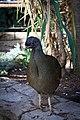 In the Aviary (31356203983).jpg