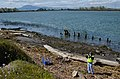 Inspecting a Sacramento River levee (8598951924).jpg