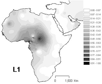 Haplogroup L1 (mtDNA) - Projected spatial distribution of haplogroup L1 in Africa.