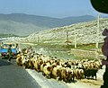 IranKhuzistan1.jpg