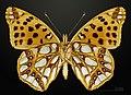 Issoria lathonia MHNT CUT 2013 3 24 PONT GERENDOINE Male Ventral.jpg