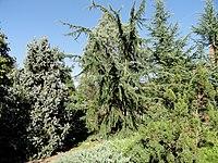 J. C. Raulston Arboretum - DSC06185.JPG