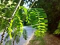 JNU Green Leaves Near Road.jpg