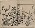 Japonica, bell flowers, and anemone LCCN2008660984.jpg
