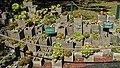 Jardín Botánico Mexico City 87.jpg