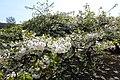 Jardin des Plantes @ Paris (33549355092).jpg