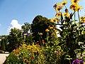 Jardin of Residenz, Würzburg, 22 Aug 2010 - panoramio - anagh (7).jpg