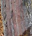 Jaspilite banded iron formation (Soudan Iron-Formation, Neoarchean, ~2.69 Ga; Rt. 169 roadcut between Soudan & Robinson, Minnesota, USA) 9 (18852318920).jpg