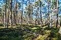 Jersikas pagasts, Latvia - panoramio (8).jpg