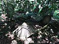 Jewish Cemetery - Lesko - Poland - 02 (36399712736).jpg