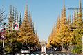 Jingu-Gaien-Ginkgo-Street-04.jpg
