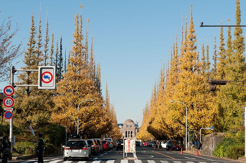 File:Jingu-Gaien-Ginkgo-Street-04.jpg