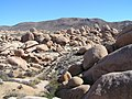 Joshua Tree National Park - panoramio (14).jpg