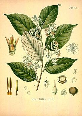 Таким товаром уже в древности стал «стиракс» — смолоподобный. Эры, была «бензойная смола», получаемая с деревьев 1 семейства стираксовых.