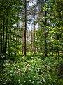 Köllnischer Wald.jpg