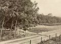 KITLV - 79937 - Kleingrothe, C.J. - Medan - Grow beds and six-year-old trees at a rubber plantation in Malaysia - circa 1910.tif