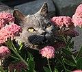 Karli auf Schmetterlingsjagd (15069847740).jpg
