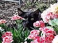 Katze und Blumen im Garten.jpg