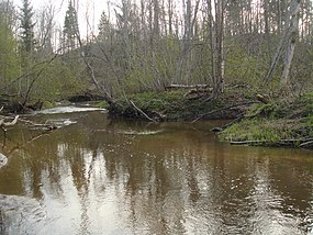 Kauliņupe flows in Ruņa - panoramio.jpg