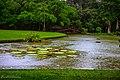 Kebun Raya Bogor 10.jpg