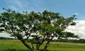 Kekirawa view30.png