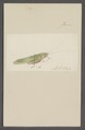 Kend - Print - Iconographia Zoologica - Special Collections University of Amsterdam - UBAINV0274 066 01 0086.tif