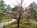 Kenrokuen garden 2.jpg