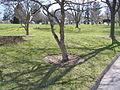 Kensico Gardens 800.jpg