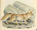 Keulemans ruppells fox.png