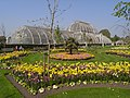 Kew Gardens Palm House 6248.JPG
