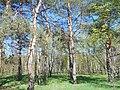 Khimselyshche, Cherkasy, Cherkas'ka oblast, Ukraine - panoramio (340).jpg