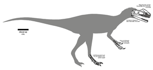 Kileskus - Diagram showing known fossil remains