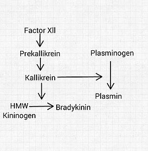 Kinin–kallikrein system - Image: Kinin Kallikrein System Simplified