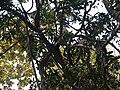 Kottaiyachachi (in Tamil) (4353626542).jpg