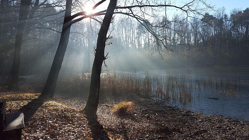 L'inverno alla Palude Pollini.jpg