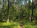 Lüneburger Heide 074.jpg