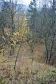LSG Sudmerberg - Wildwechsel zum Gipfel (3).jpg