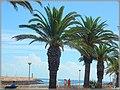 Lagos (Portugal) - 15789624596.jpg