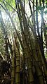 Laika ac Bamboo (7359679116).jpg