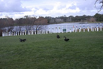 Weston Park, Canberra - Black swans at SIEV X monument