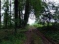 Landschaftsschutzgebiet Strothheide Melle Datei 17.jpg